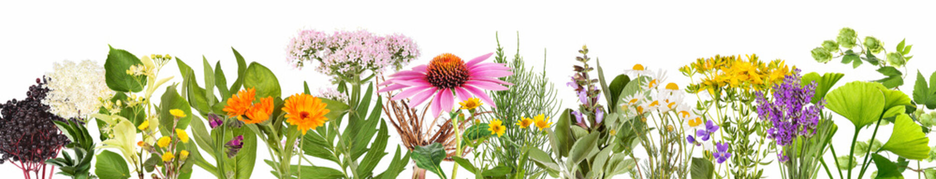 Various medical plants