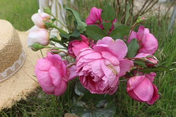 The roses in the garden.