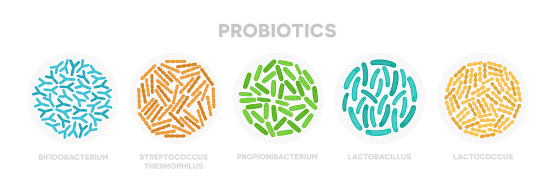 Set of probiotic bacteria. Good microorganisms concept isolated on white background. Propionibacterium, lactobacillus, lactococcus, bifidobacterium, streptococcus thermophilus, escherichia coli