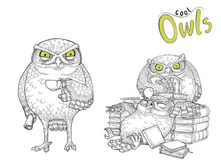 Cute  owls character hand drawn.