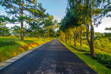 Pick up the dawn in the tourist valley of love, the morning light shines through pine forest and flower garden in Da Lat- Thung lung tinh yeu valley