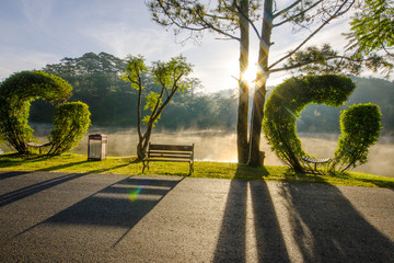 sun shines through the curved trees in the valley of love, a famous tourist city of Da Lat