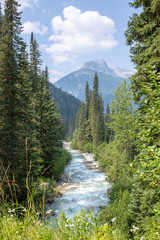 River crossing a forest in the Canadian rockies