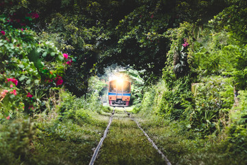 Train running on Natural Train tree tunnel in Thailand Bangkok