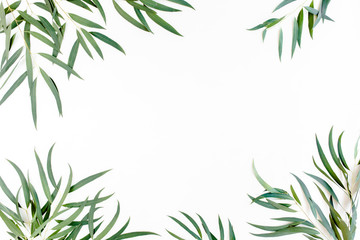 frame of green branches, eucalyptus leaves nicoli on a white background. flat layout, top view