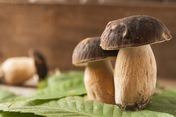 Porcini mushrooms (boletus edulis) on a wooden table