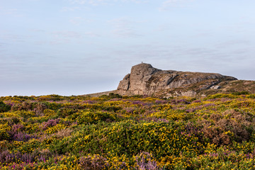 Haytor, Large Granite outcrop in Dartmoor National Park, Devon,UK in late afternoon sun with foreground of flowering pink heather and yellow gorse