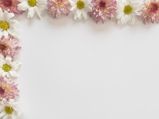 Top view of pink and white flowers, those are called Chrysanthemum, placed on top and left of frame on white background