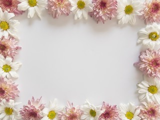 Top view of pink and white flowers, those are called Chrysanthemum, placed around of frame on white background