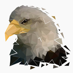Isolated bald eagle on white background,Low poly head of falcon,Vector illustration