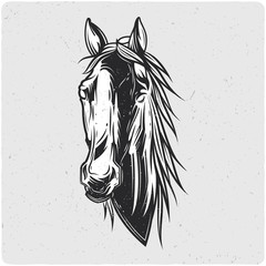 Horse's head. Black and white illustration. Isolated on light backgrond with grunge noise and frame.