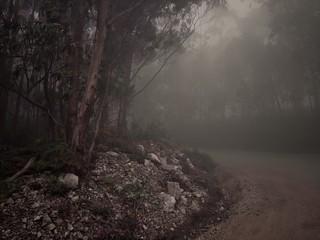 Niebla en la montaña de Lugo