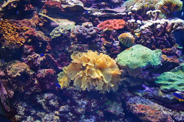 colored corals and tropical fish under water