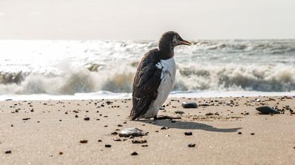 Vogel am Meer, Seevogel