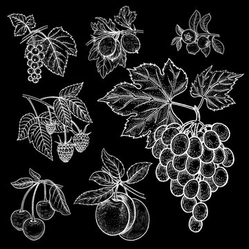 Berries and fruit set. White chalk on black board.