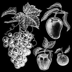 Apple, mango, mandarin, grapes. Realistic hand drawing. White chalk on black board.