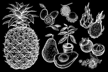 Set of vector exotic fruits in the style of vintage prints. White chalk on black board
