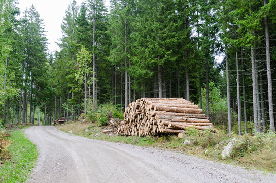 Woodpile by roadside in a coniferous forest