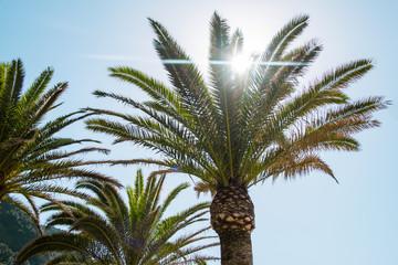 Beautiful big green palms. Sunny summer day.