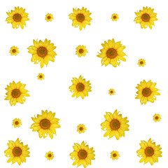print. sunflower isolated pattern on white background