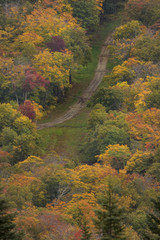 path in colorful fall foliage forest