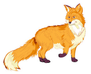Fantasy illustration of cute red fox on white background. Hand-drawn vector image.