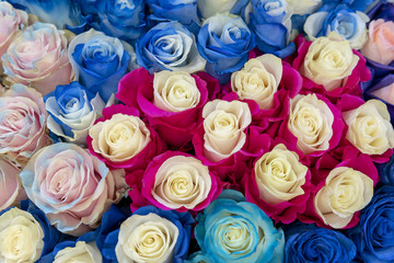 Large multi-colored roses background.
