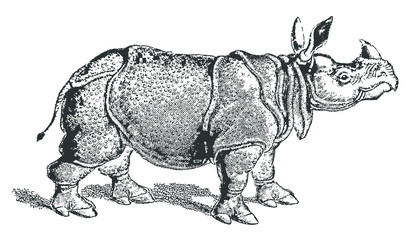 Indian rhinoceros (rhinoceros unicornis) in profile view. Illustration after a historic lithography or engraving from the early 19th century