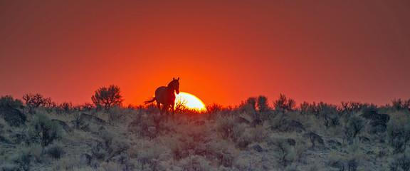 Horse silhouette in front of orange sky and setting sun on an arid high desert plain.