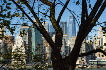 (Selective Focus) Amazing view of the Manhattan skyline and a beautiful tree in the foreground seen from the Brooklyn Bridge Park. Sunny day of October in New York. USA.
