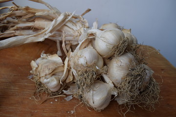 Uncleaned garlic heads with roots and stems on a wooden painted light background. Copy space.