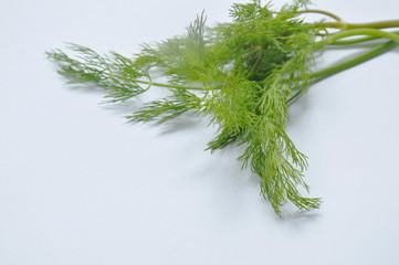 fresh dill or parsley tropical herb on white background