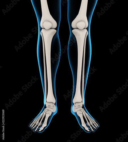 Human Leg Bones Anatomy Stock Photo And Royalty Free Images On