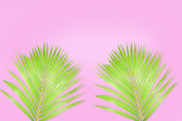Palm tree design on pink background for your texture or concept,Sale billboards
