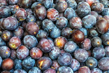 organic plum fruit on the farm market. Ripe juicy plums as background
