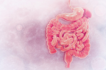 Human digestive system on scientific background