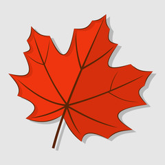 Maple autumn leaf isolated on a white background. Vector illustration