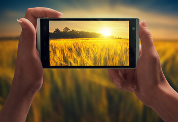 Sunrise in a wheat field on a screen of smartphone