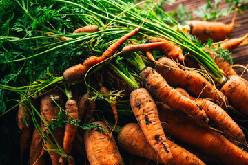 Fresh carrots from the garden close-up on a wooden background