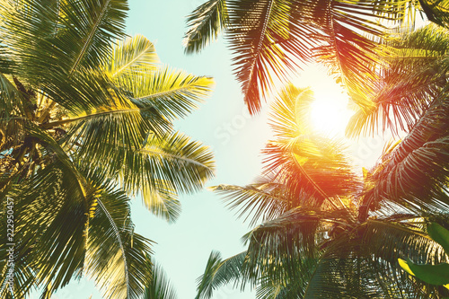Wall mural Coconut palm tree on  blue sky background.