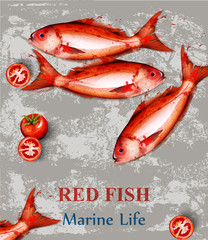 Red fish watercolor Vector. Fresh small fishes on vintage backgrounds. Menu templates