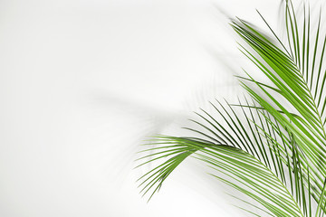 Wall Mural - Fresh tropical palm leaves on white background