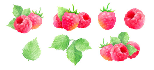 raspberries, watercolor hand-drawn drawing of a red berry, isolated illustration on a white background
