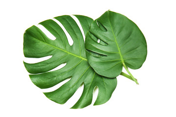 Fresh tropical monstera leaves on white background Wall mural