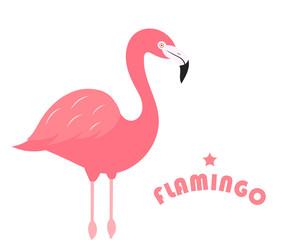 Flamingo bird on white background