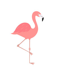 Flamingo bird isolated on white icon