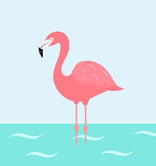 Flamingo bird wading