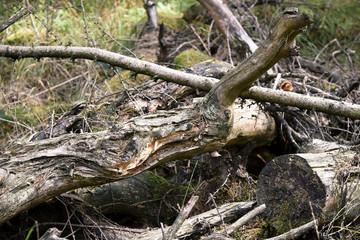 Forstwirtschaft ist nicht immer Profit-voll
