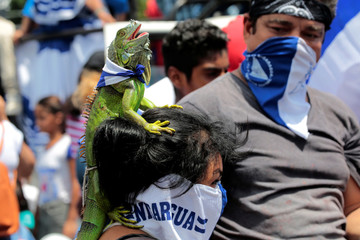 An anti-government protester carries an iguana on her head, as she takes part in a protest against Nicaraguan President Daniel Ortega's government in Managua