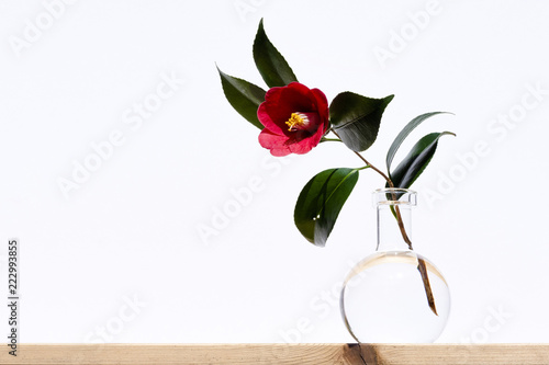 Camellia Red Flower Vase For One Flower Stock Photo And Royalty